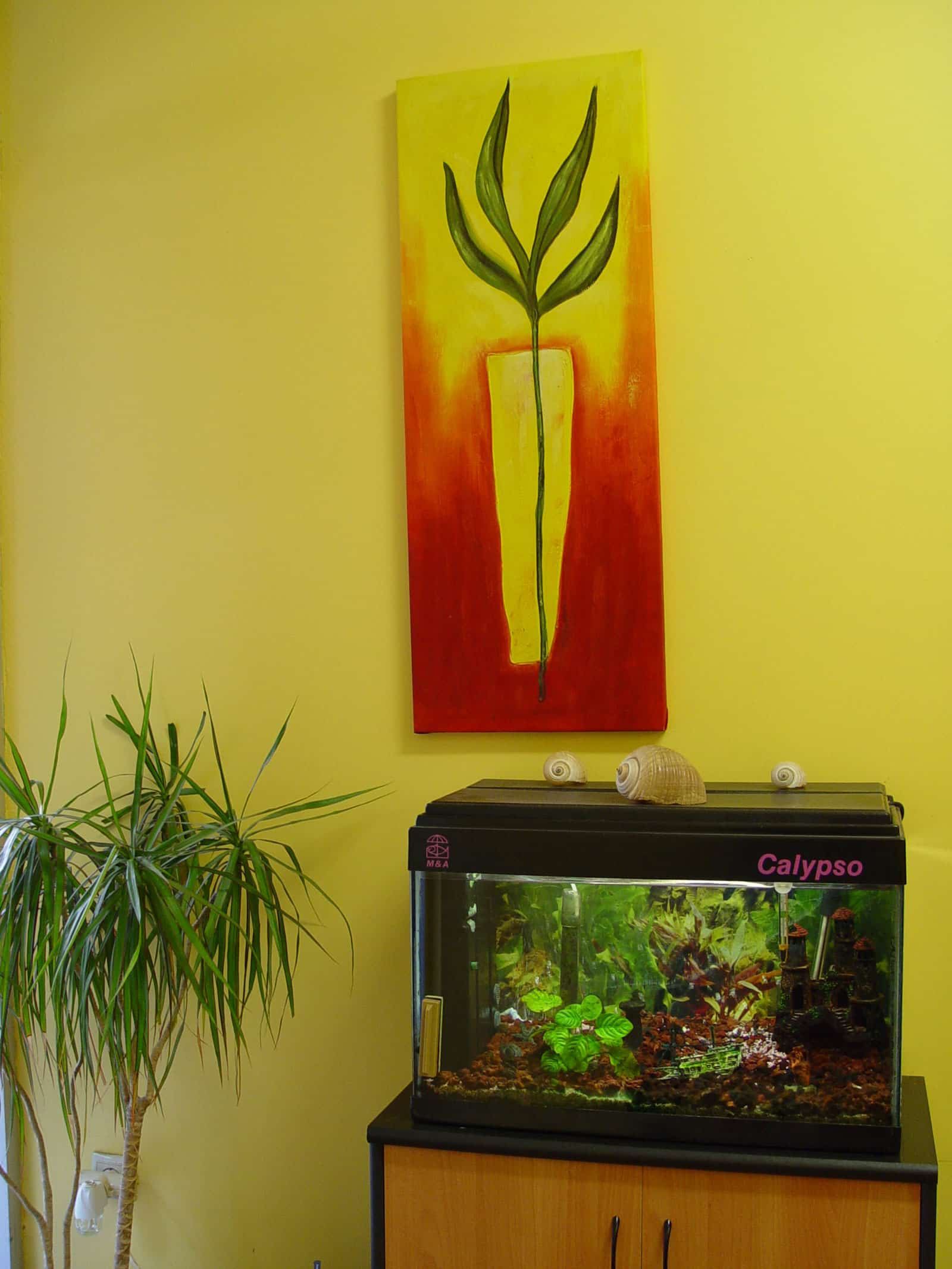 φροντιστήριο ΚΟΥΦΟΠΟΥΛΟΥ εσωτερικά φυτά